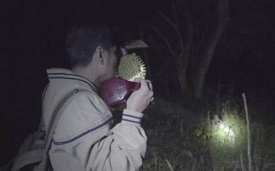 durian-picking 4